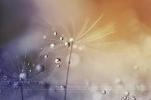 :: Make a wish.. :: by Liek