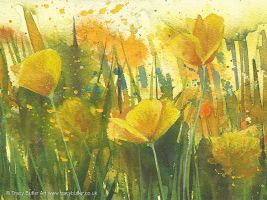 Yellow Poppies by tracybutlerart