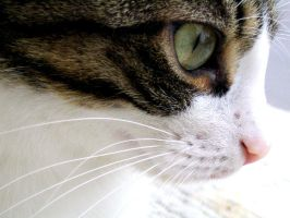 eye, nose and whiskers by fi-j