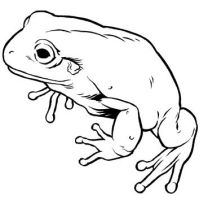 White's Tree Frog by ColbyBluth