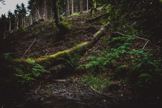 Brander Wald - 2 by chickow