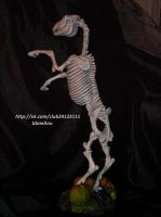 Lucy , the horse skeleton by ElizavetaGorojankina
