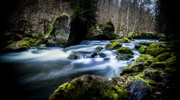 river in forest by DanielGliese