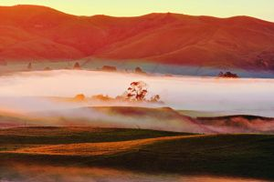 Morning glory by Capturing-the-Light