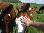 Petting a horse by fum316