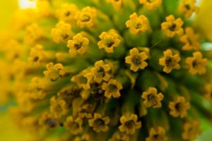 yellow flower macro by pringle753