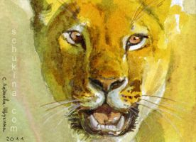 ACEO Spirit of Lioness by sschukina