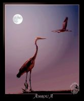 Birds under the moon by AMROU-A