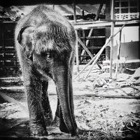 Elephant Baby by MichiLauke