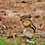 Hungry Little Critter by musicismylife10027