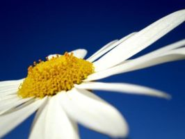 Daisy Numbered by game-breaker