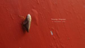 Young Hopper by GraphiteOnPaper