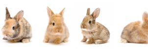 Baby bunnies line up by TamarViewStudio
