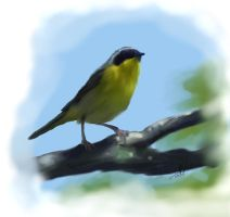 1 Hour Yellowthroat by Yggdrassal