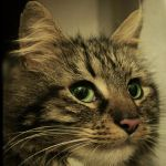 Feline Close-Up by LeaHenning