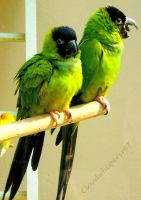 Funky Green and Black Parrots by Cloudwhisperer67