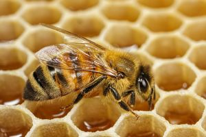 Honeybee Filling Honeycomb by dalantech