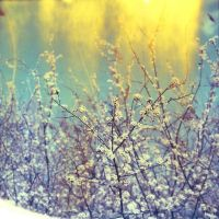 Goodbye winter goodbye by Viscosa