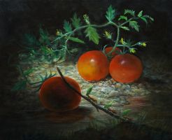 Tomatoes by marcheba