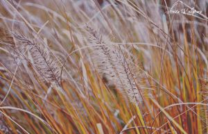 Autumn_grass by Rouge07