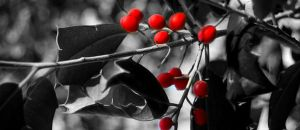 Beach Berries by Takemybreathaway1191