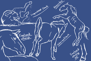Horse Pose Study by Seraphiima-Stables