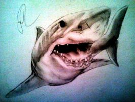 shark by Silk86