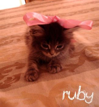 ruby the kitty by beralo0o