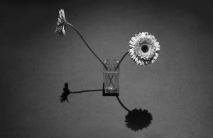 Flowers and shadows by AlbertoCuccodoro