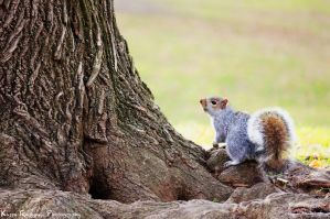 Tree and Squirrel by KasraRassouli