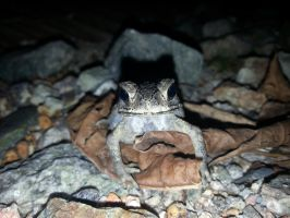 Toad 2Nov2014 2 by RiverKpocc