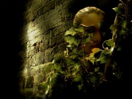 ivy by tracyjtz