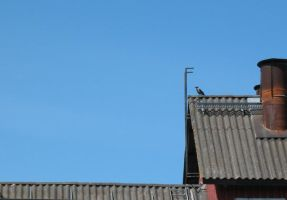 Bird on the roof by Minnake