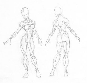 Female Muscle Groups Study by GavinMichelli