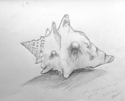 Conch Shell - initial sketch by Rhino0