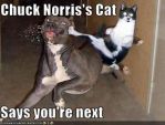 Chuck Norris Cat by Loser7497