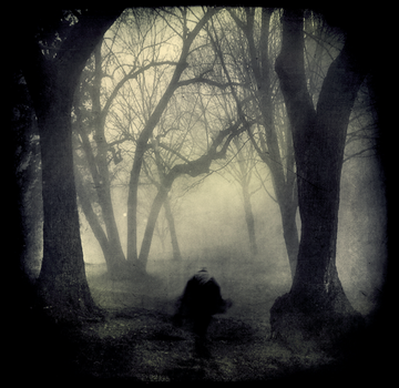 Whose Woods Are These II by intao