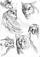 Animal Quick Sketch by Galwin