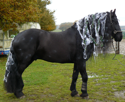 Halloween horse stock frisian by Nexu4