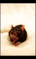 Yawn Rat II by SecretNocturne