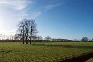 Stock Field by Annarigby