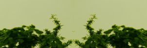 Organic Symmetry 1 by meathive