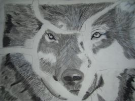 Timber wolf by khelledros