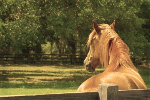 Horse by Paperback-writer-00