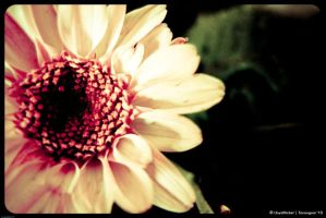 For You by lloydmickel