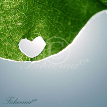 Love for Nature by FaMz
