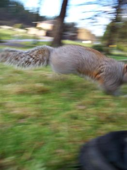 Hello, squirrely. by HereComesTheSunKing