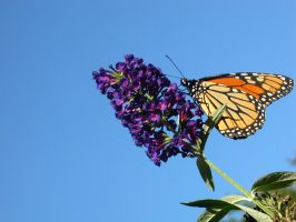 butterfly i by equusstock