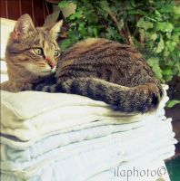The princess and the pea by Lilith1995