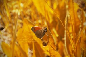 The Old Golden Days by Wnison
